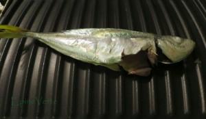 chinchard après séchage au four sur le grill