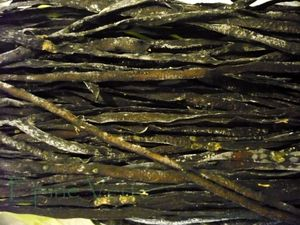 Haricots de mer (ou spaghetti de mer)